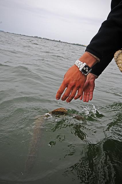 Catch & Release - www.przewodnicywedkarscy.pl - Wyprawy wędkarskie