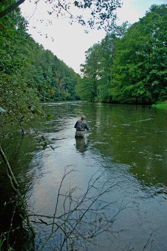 Bóbr - www.przewodnicywedkarscy.pl - Wyprawy na ryby