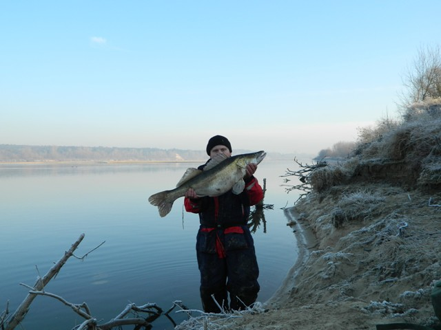 Okaz sandacza - www.przewodnicywedkarscy.pl - Wyprawy na ryby