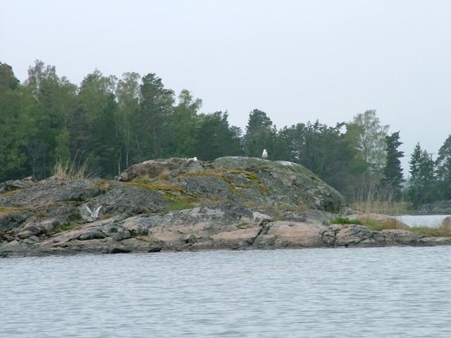 Szwecja - Szkiery Sztokholm - www.przewodnicywedkarscy.pl - Wyprawy na ryby