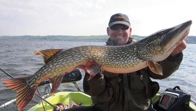 Wyprawy na ryby - www.przewodnicywedkarscy.pl - Szczupak 112 cm