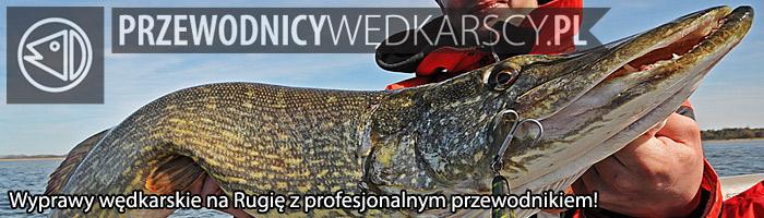 Wyprawy na Rugię z przewodnikiem - www.przewodnicywedkarscy.pl - Wyprawy wędkarskie