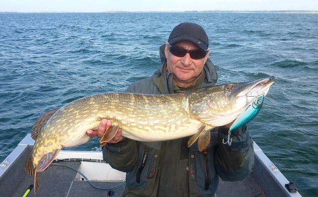 Szczupaki z Rugii - www.przewodnicywedkarscy.pl - Wyprawy na ryby z przewodnikiem