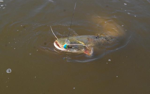 Wisła - sum - www.przewodnicywedkarscy.pl - Wyprawy na ryby