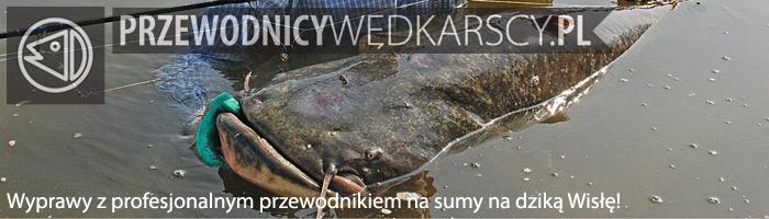 Wyprawy na sumy - www.przewodnicywedkarscy.pl - Wyprawy wędkarskie na Wisłę