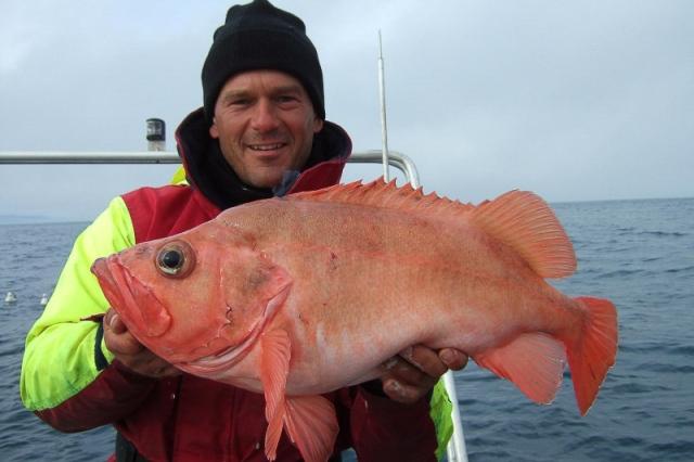 Wyspa Senja Norwegia - www.przewodnicywedkarscy.pl - Na ryby do Norwegii